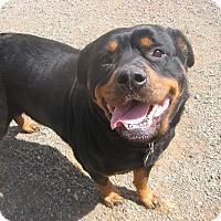 Adopt A Pet :: Zelda - Crescent City, CA