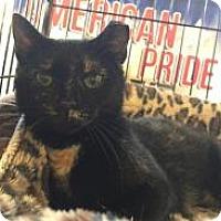 Adopt A Pet :: Morgan - Bear, DE