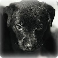 Adopt A Pet :: Delilah - Fredericksburg, VA