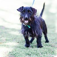 Adopt A Pet :: Yin $125 - Seneca, SC