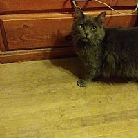 Adopt A Pet :: Jessie - Palm Springs, CA