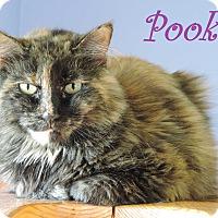 Adopt A Pet :: Pookey - Brookings, SD