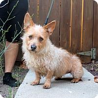 Adopt A Pet :: Georgette - Los Angeles, CA