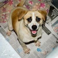Adopt A Pet :: Okie - Blairsville, GA