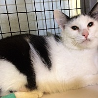Adopt A Pet :: Sassy - Grants Pass, OR