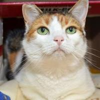 Adopt A Pet :: Dodie - Chestertown, MD