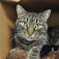 Adopt A Pet :: Fancy - Oshkosh, WI