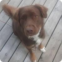 Adopt A Pet :: Cub - Rigaud, QC