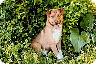 Shepherd (Unknown Type) Mix Dog for adoption in Zanesville, Ohio - # 158-13 RESCUED!