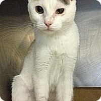 Adopt A Pet :: Lily - New York, NY