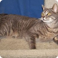 Adopt A Pet :: Hamelton - Colorado Springs, CO