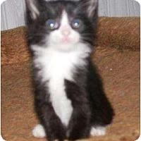 Adopt A Pet :: Buckley - Kirkwood, DE