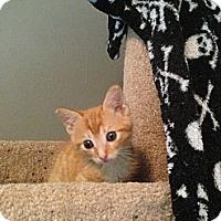 Adopt A Pet :: Garcia - Monroe, GA