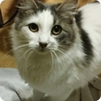 Adopt A Pet :: Foxy - Vancouver, BC