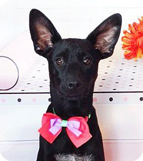 Labrador Retriever Mix Puppy for adoption in Castro Valley, California - Lora