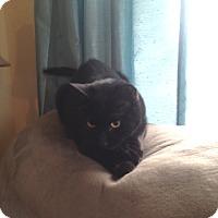 Adopt A Pet :: Morgan - Weatherford, TX