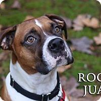 Adopt A Pet :: Rocky Juan - Woodinville, WA
