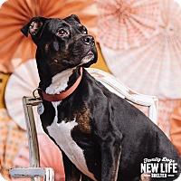 Adopt A Pet :: Nahla - Portland, OR