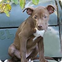 Adopt A Pet :: Grant - Dayton, OH