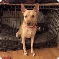 German Shepherd Dog Mix Dog for adoption in waterbury, Connecticut - Maebe