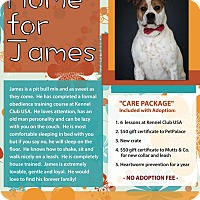 Adopt A Pet :: James - Dublin, OH