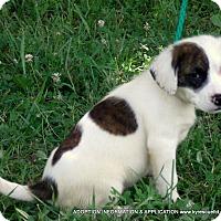 Adopt A Pet :: Giggles-ADOPTED - PRINCETON, KY