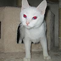 Adopt A Pet :: Sapphire - San Bernardino, CA