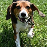 Adopt A Pet :: Daisy - Lacon, IL