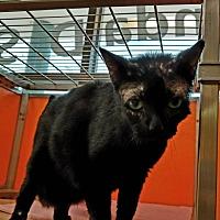 Adopt A Pet :: Scabby - Elyria, OH