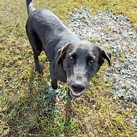 Adopt A Pet :: Nellie - Coldwater, MI