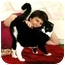 Photo 3 - Domestic Mediumhair Cat for adoption in Scottsdale, Arizona - Sweet, loving Orlando