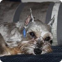 Adopt A Pet :: Jacob toy - North Benton, OH