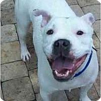 Adopt A Pet :: Georgia - Navarre, FL