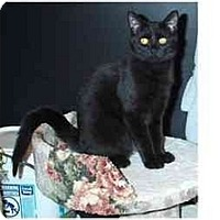 Adopt A Pet :: Gus - Acme, PA