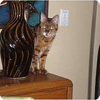 Adopt A Pet :: Howard - Lantana, FL