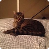 Adopt A Pet :: Tobi - Vancouver, BC