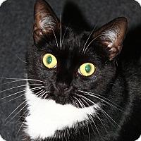 Adopt A Pet :: Katniss Everdine - North Branford, CT