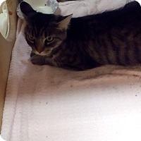 Adopt A Pet :: Rojas - West Dundee, IL