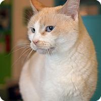 Adopt A Pet :: Edie - Los Angeles, CA
