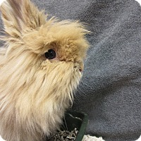 Adopt A Pet :: Blondie - Newport, DE