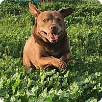 Adopt A Pet :: Urgent! Oso - Dana Point, CA