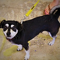 Adopt A Pet :: Jake - Redondo Beach, CA