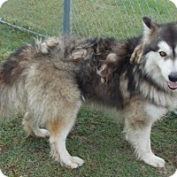 Adopt A Pet :: Rufus - Augusta County, VA