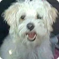 Adopt A Pet :: Lady-ADOPTION PENDING - Boulder, CO