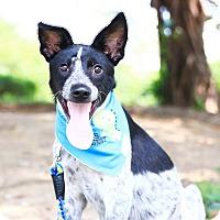 Adopt A Pet :: Gene - San Mateo, CA