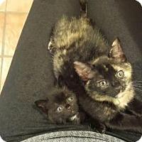 Adopt A Pet :: SecondBreakfast - Trenton, NJ