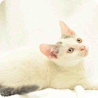 Adopt A Pet :: Ray - St. Cloud, FL