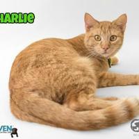 Adopt A Pet :: Charlie - Fairhope, AL