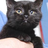 Adopt A Pet :: APRIL - Gloucester, VA