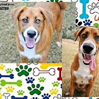 Adopt A Pet :: BADGER - Grovetown, GA